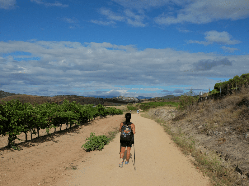 walker on the camino trail in summer